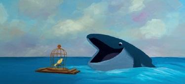 thebirdandthewhale
